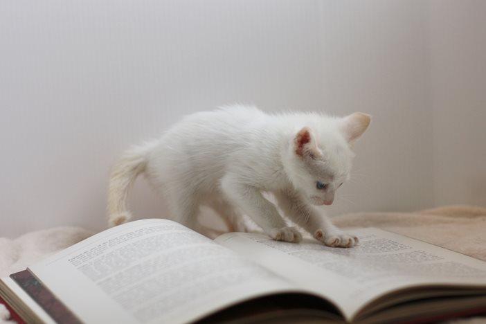 フリーランスは「速読」を覚えて本・新聞などから効率よく情報収集を
